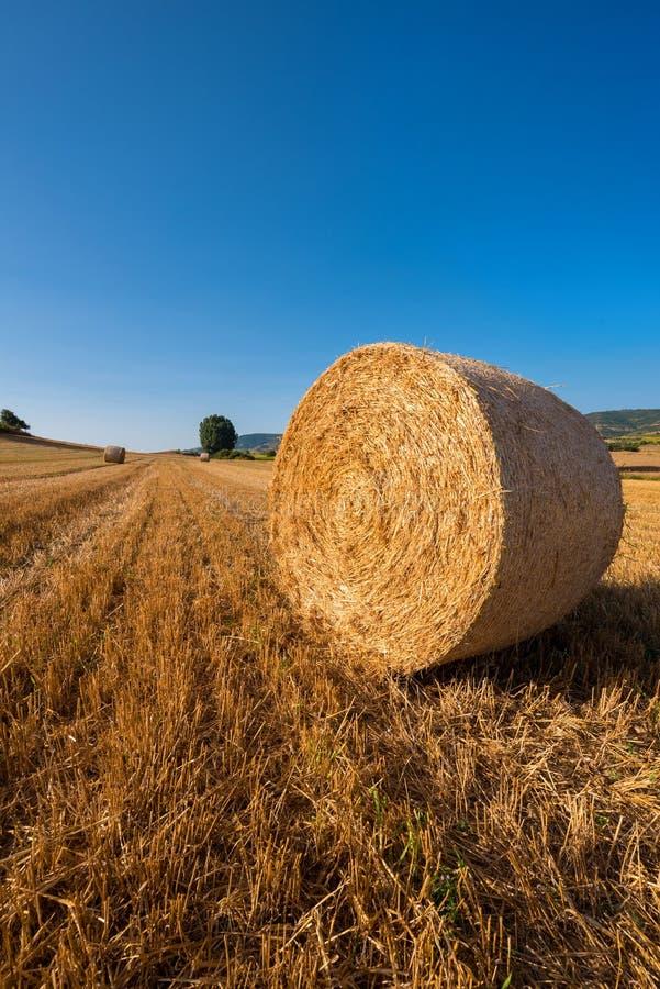 Siano kaucja zbiera w złotym pole krajobrazie zdjęcie royalty free