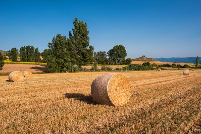 Siano kaucja zbiera w złotym pole krajobrazie zdjęcia royalty free