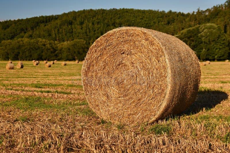 Siano kaucja zbiera w złotym pole krajobrazie Lato Rolna sceneria z Haystack na tle Piękny zmierzch fotografia stock