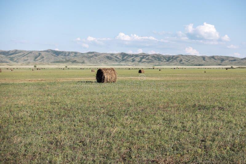Sianokosy łąka z tłem góry Wschodni Kazachstan region obraz stock