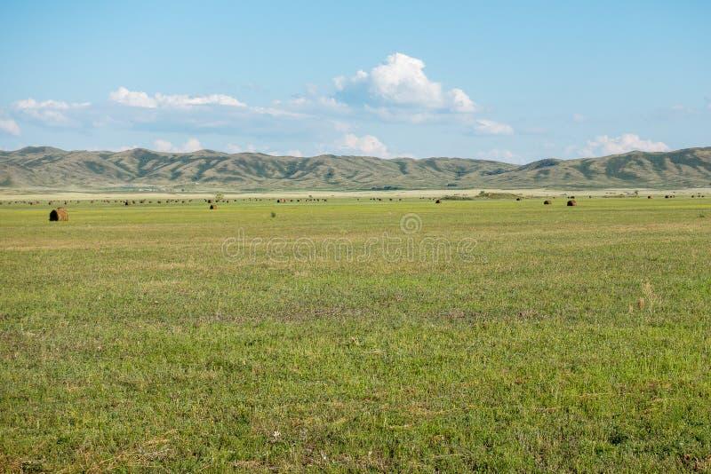 Sianokosy łąka z tłem góry Wschodni Kazachstan region zdjęcia stock