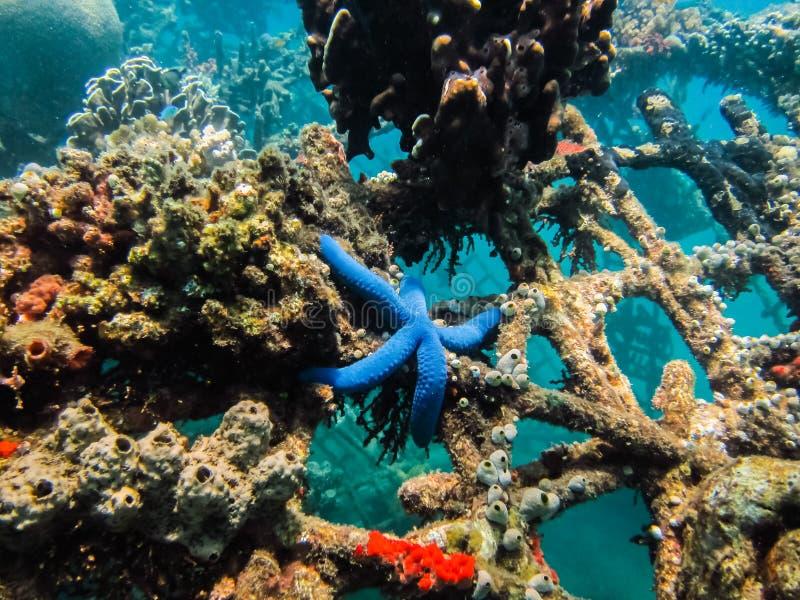 siatka koral w morzu zdjęcie royalty free