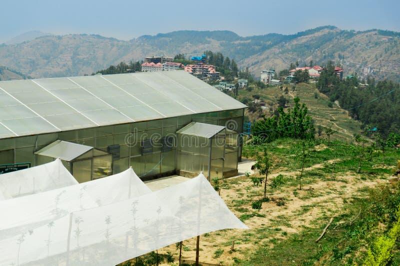 Siatkarstwo namioty ochraniać saplings obrazy stock