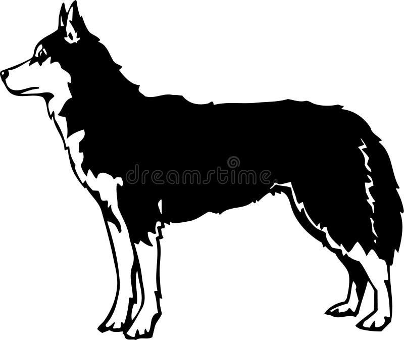 Sibérien noir et blanc Husky Illustration illustration libre de droits