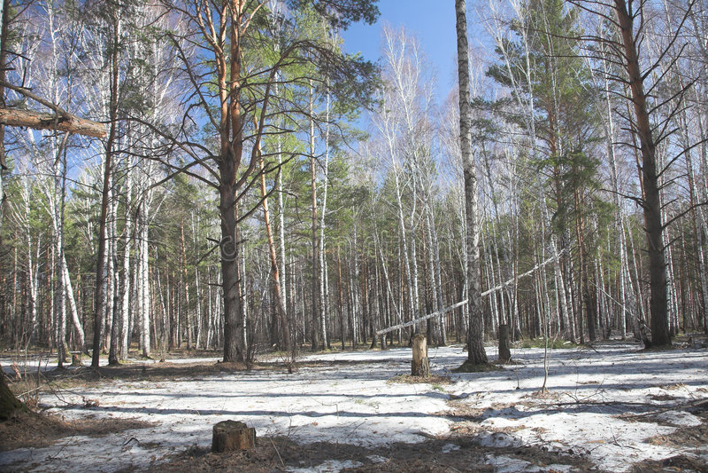 siberian весна стоковая фотография