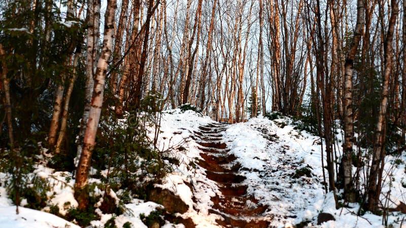 Siberian came out fresh air. stock photos