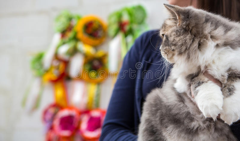 Siberian cat at the cat show. Siberian cat (grey tabby with white markings) at a cat show stock photos
