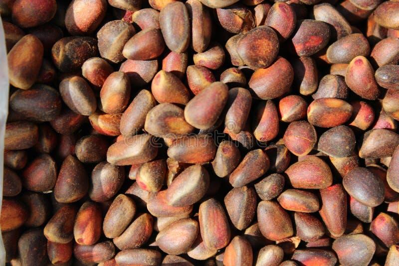 Siberian cedar nuts stock photo