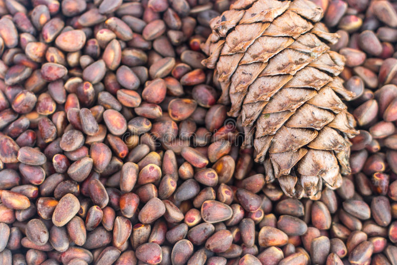 Siberian Cedar Pine Nuts Background fotografering för bildbyråer