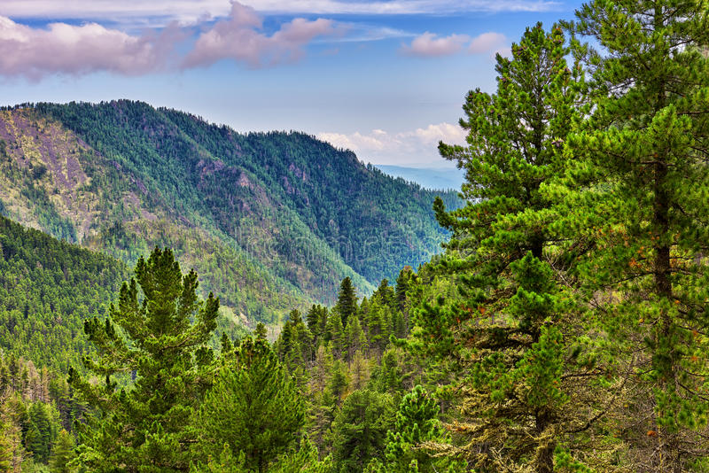 Siberian coniferous taiga in foothills. Eastern Sayan Mountains. Russia royalty free stock images