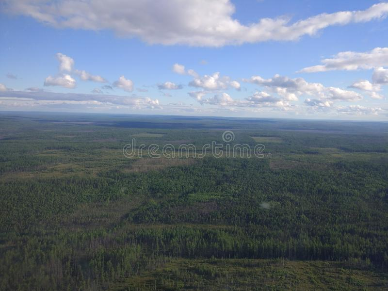Siberian forest and sky stock photo