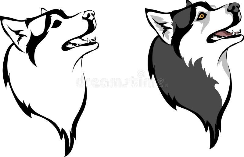 Siberian Husky. Head dog breed Siberian Husky