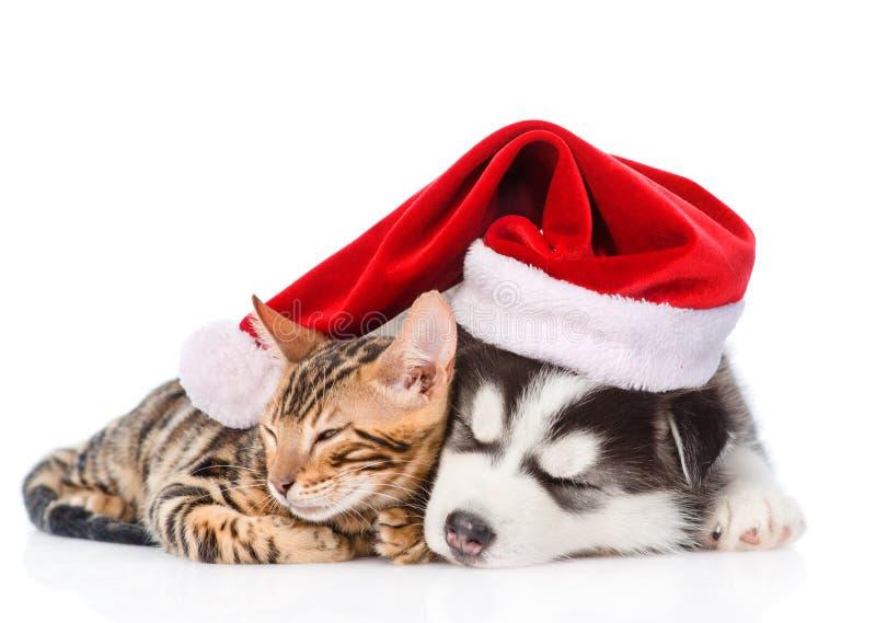 Siberian Husky puppy in santa hat sleep with bengal kitten. isolated on white background stock photos