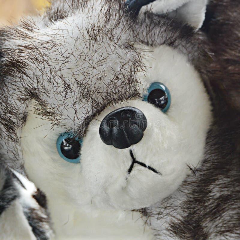 Siberian Husky Stuffed Animal fotografia de stock