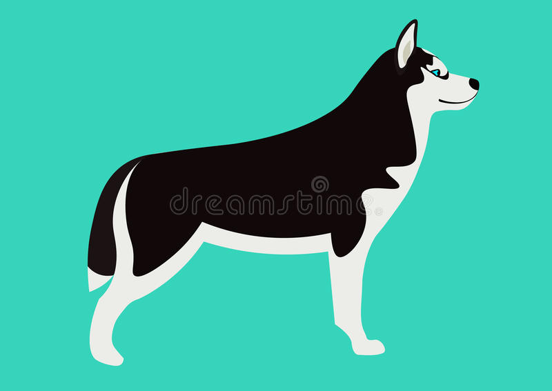 Siberian husky vector illustration. adorable black and white Husky royalty free illustration