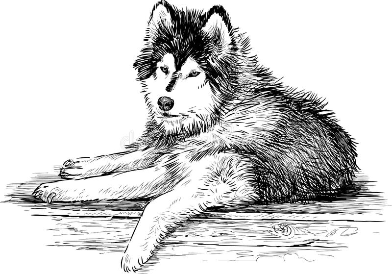 Download Siberian husky stock image. Image of lying, snout, drawn - 31922107