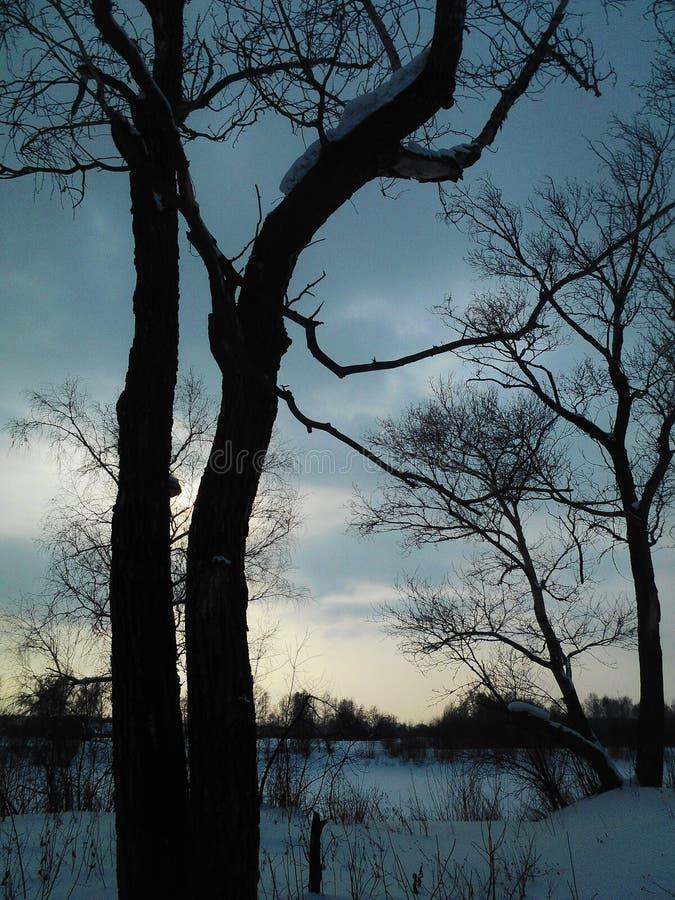 Siberian landskap med träd och moln arkivfoto
