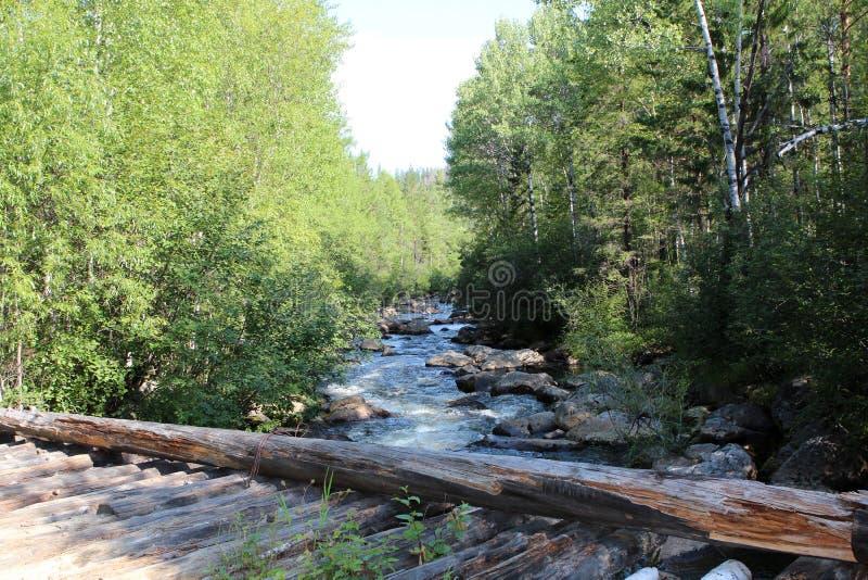 Siberian skogbro över den snabba floden Björk och pinjeskog arkivfoton