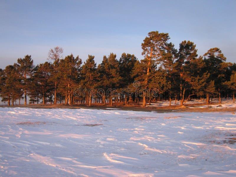 The Siberian taiga stock photos