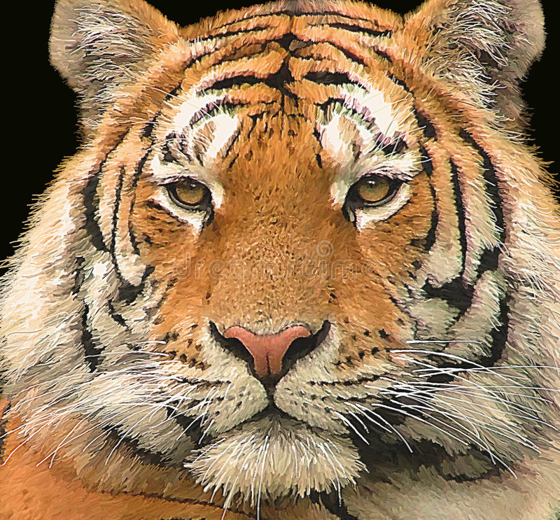 Siberian Tiger Portrait stock illustration