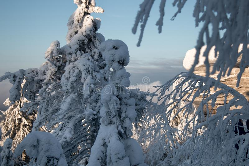 Wood is filled with snow, snowcap on branches og fir-trees. Siberian winter, snowy winter, frosty winter. Wood is filled with snow, snow-covered forest. Snow stock photos