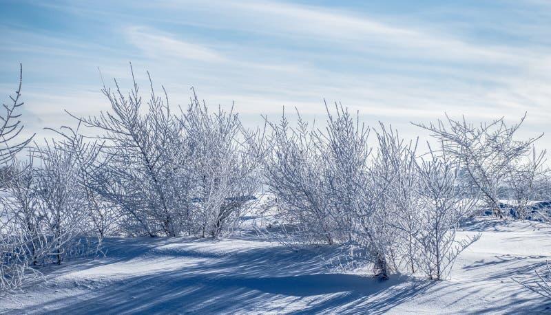 Siberische bomen die met vorst tegen de blauwe hemel op een ijzige de winterdag worden behandeld stock fotografie