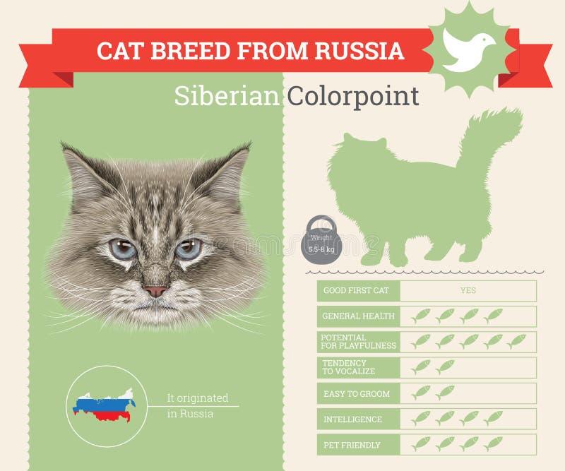 Siberische Colorpoint-infographics van het Kattenras vector illustratie