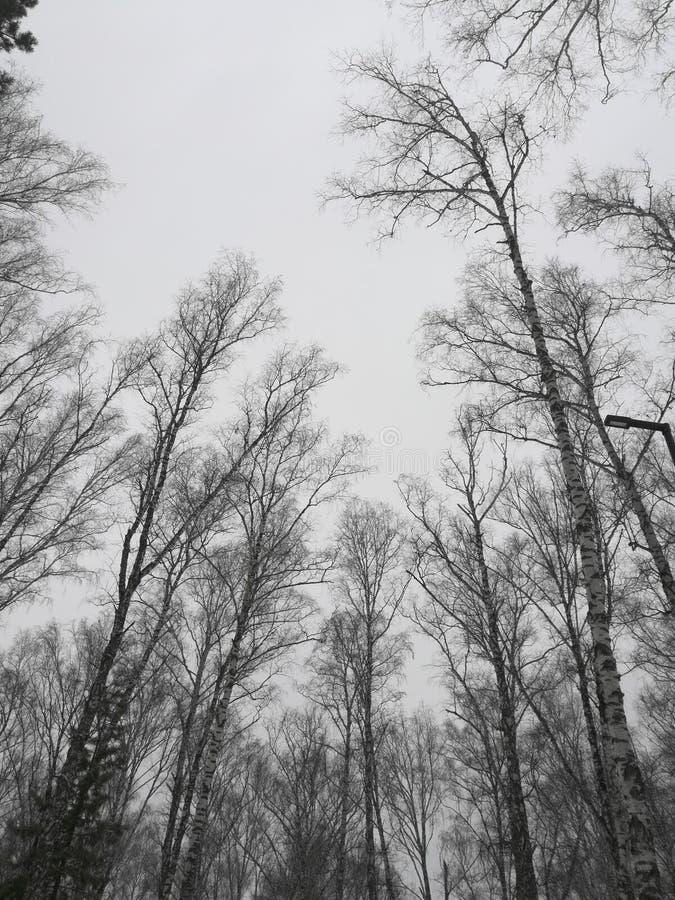 Siberische eindeloze hemel in de dofheid van weekdagen stock foto's