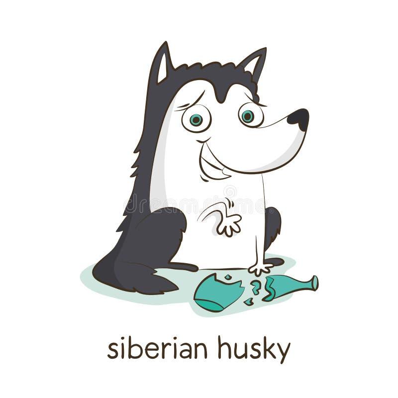 Siberische schor Hondkarakter op wit stock afbeeldingen
