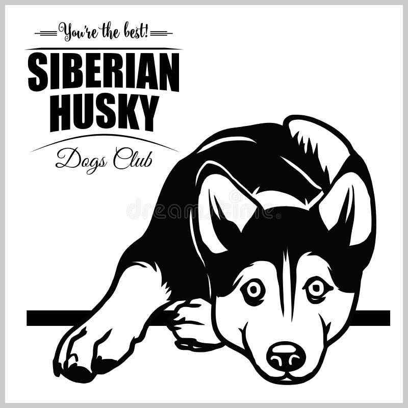 Siberische Schor - vectorillustratie voor t-shirt, embleem en malplaatjekentekens stock illustratie