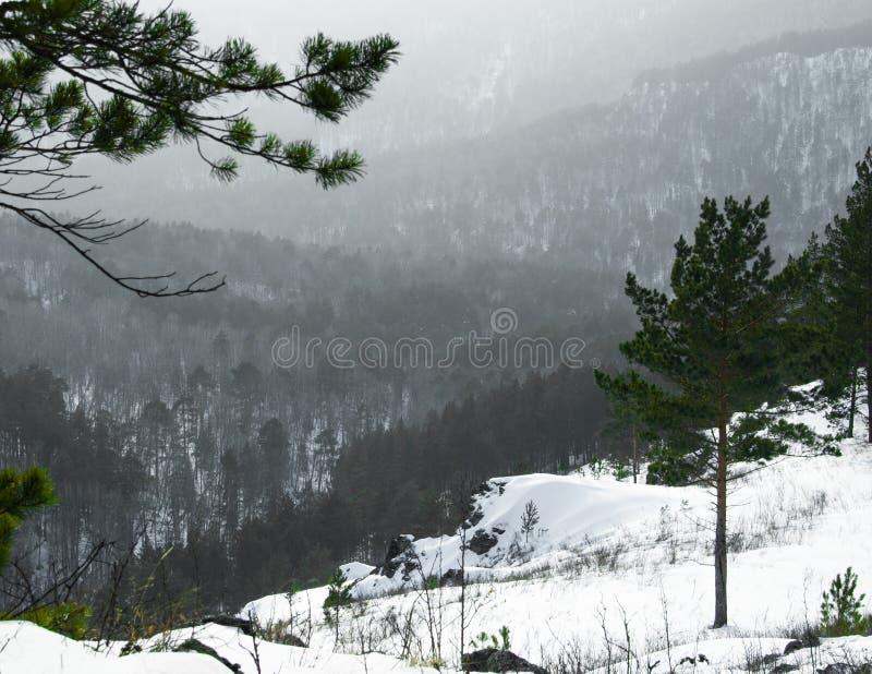 Sibirean自然山森林 图库摄影