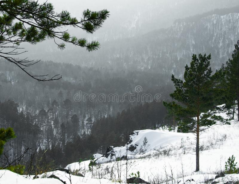 Sibirean nature mountains forest stock photography