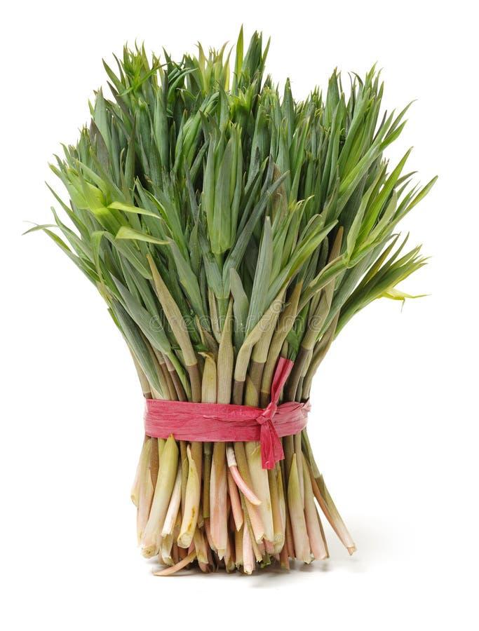 Sibiricum do Polygonatum foto de stock royalty free