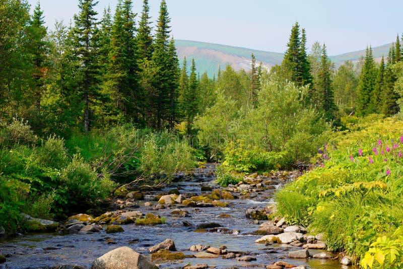 Sibirisches taiga. lizenzfreie stockfotografie