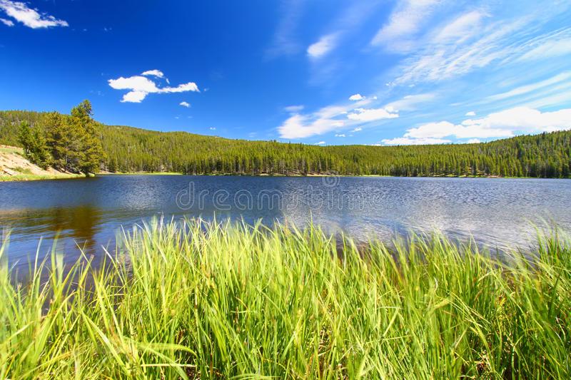 Sibley Lake Bighorn National Forest. Grass grows along Sibley Lake in the Bighorn National Forest of Wyoming royalty free stock images
