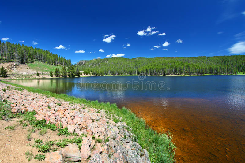 Sibley Lake Bighorn National Forest. Grass grows along Sibley Lake in the Bighorn National Forest of Wyoming royalty free stock photography