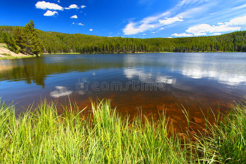 Sibley Lake Bighorn National Forest. Grass grows along Sibley Lake in the Bighorn National Forest of Wyoming stock images