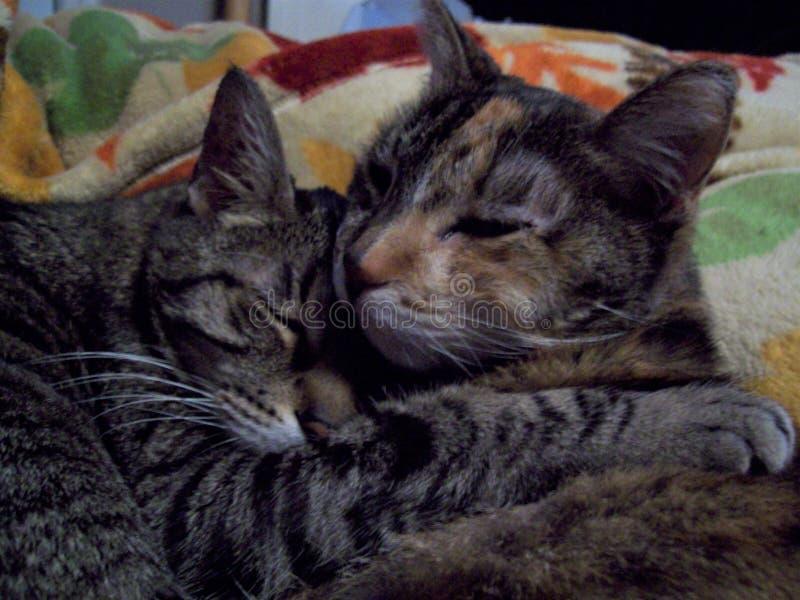 Siblingkatter smyga sig upp tillsammans royaltyfria bilder