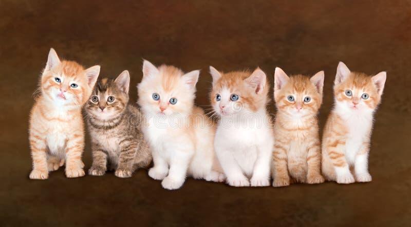 Siblings van het katje royalty-vrije stock fotografie