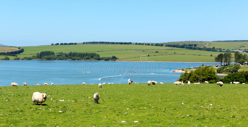 Siblyback湖Liskeard博德明停泊康沃尔郡英国英国 免版税库存照片