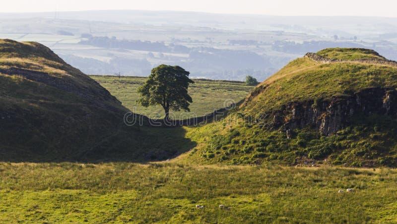 Sicômoro Gap em Roman Wall Northumberland, Inglaterra foto de stock royalty free