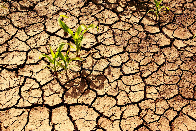Siccità, terra asciutta. fotografia stock