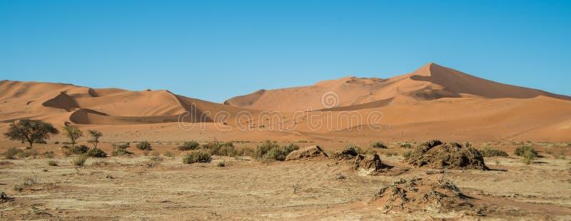 Siccità vicino alla grande duna di papà fotografie stock libere da diritti