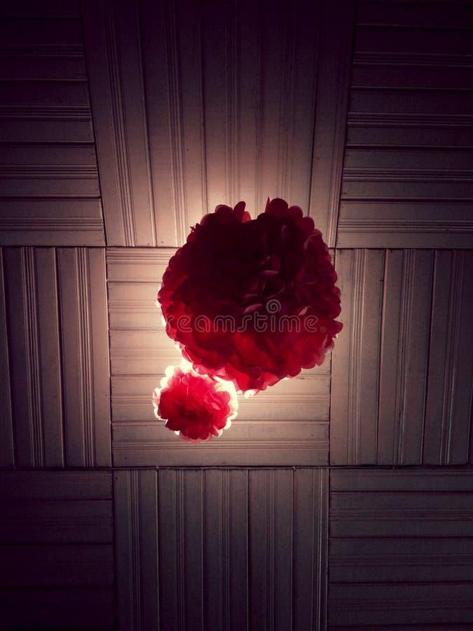 Sich hin- und herbewegende Blume mit perfekter Beleuchtung stockbild