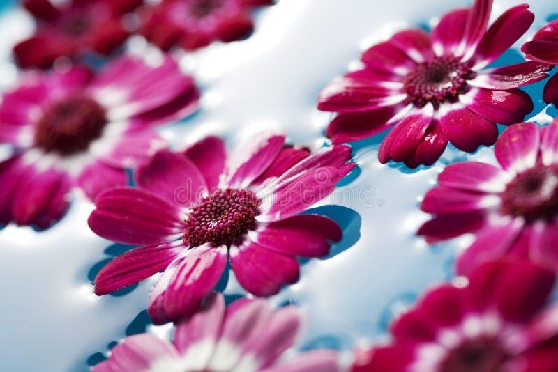 Sich hin- und herbewegende Blumen lizenzfreie stockfotos