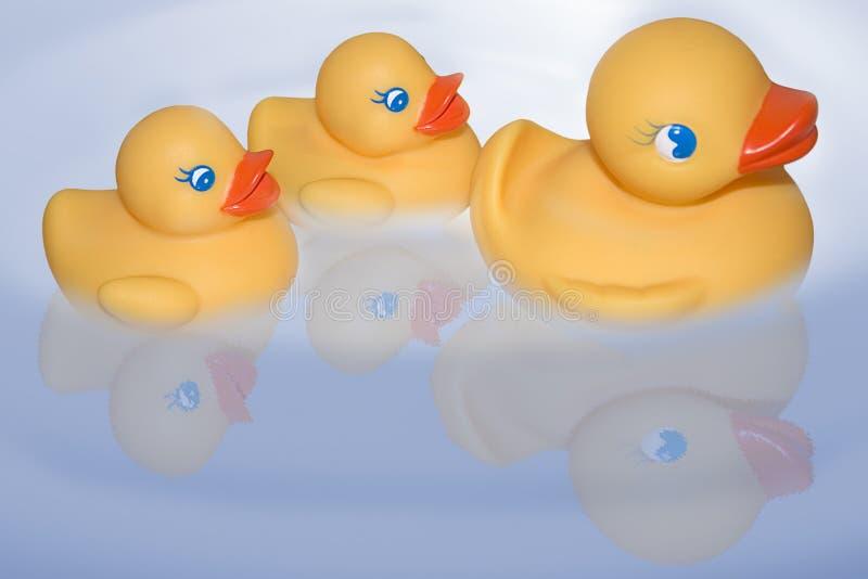 Sich hin- und herbewegende duckies stockbild