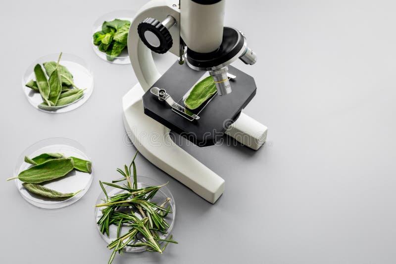 Sicherheitslebensmittel Labor für Lebensmittelanalyse Kräuter, Grüns unter Mikroskop auf grauem Draufsicht-Kopienraum des Hinterg stockfoto
