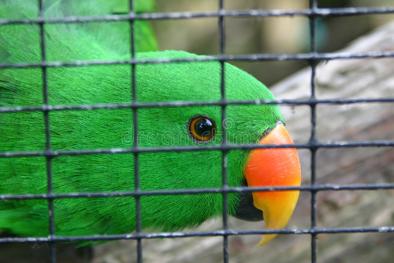 Sichernder Parakeet stockfotografie