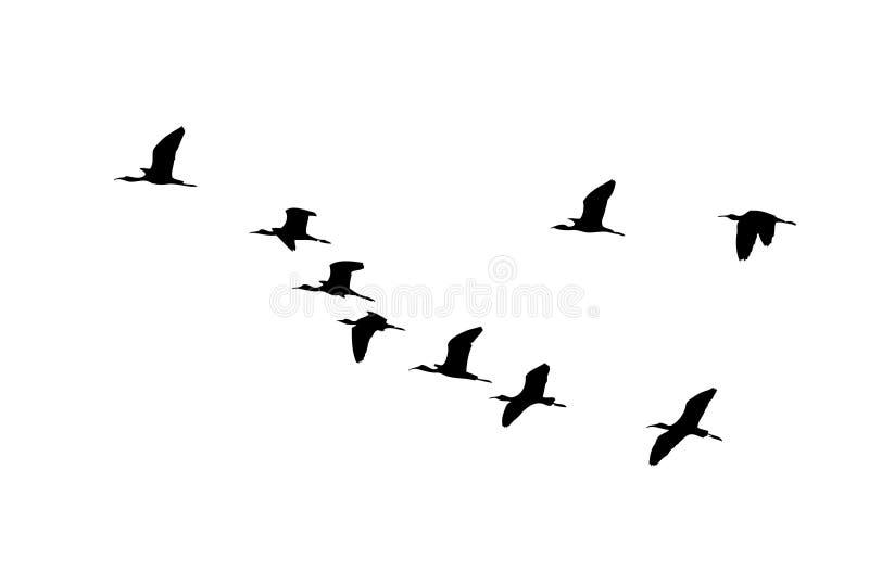 Sichlerkeil im Flug Vektorschattenbild eine Menge von Vögeln vektor abbildung