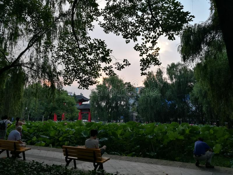 Sichuan University Louts Pond royalty free stock photos